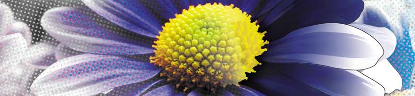 Flower_Dot_Photo_Vector